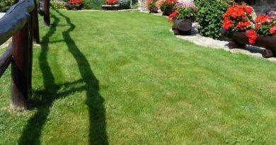 onderhoud gras